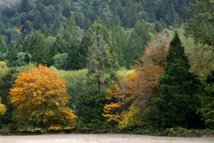 Fall colors in Wolf Creek, Oregon about 25 miles North of Grants Pass, OR