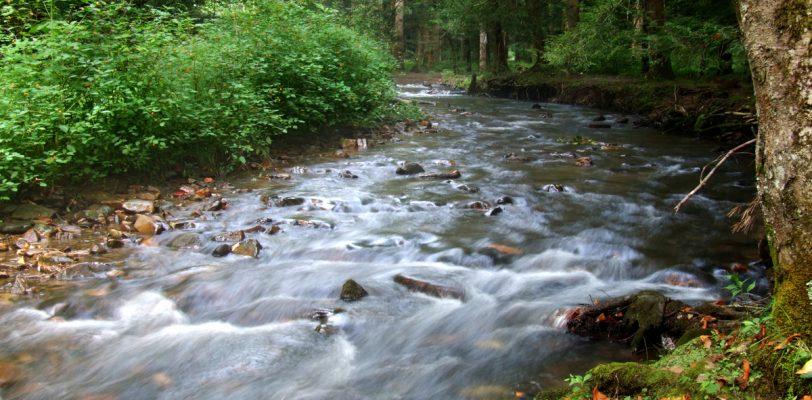 North Indian River in the Limestone Cove Recreation area. Unicoi, TN.
