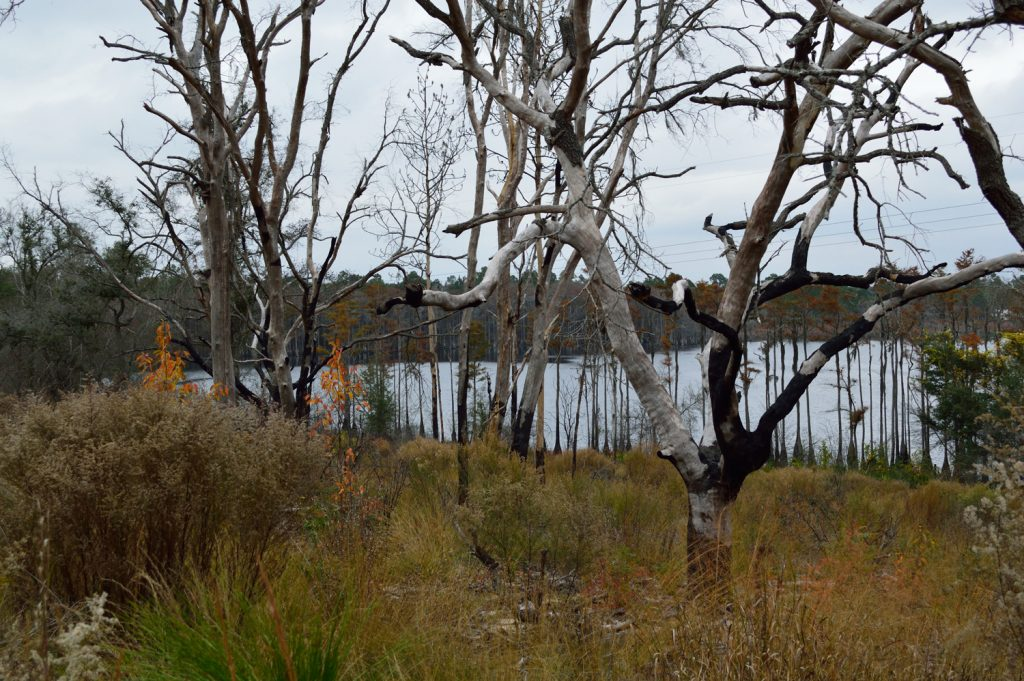 Green Ponds; lake; Florida; Fitzhugh Carter Tract; Ecofina Creeek; Wildlife Management Area; FL
